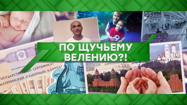 Выпуск от 29 января 2020года.По щучьему велению?!НТВ.Ru: новости, видео, программы телеканала НТВ