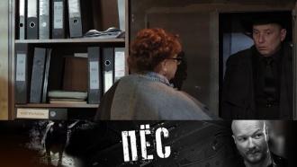 Сможетли мама Гнездилова помочь врасследовании своему непутевому сыну? «Пёс»— лучшие серии— сегодня на НТВ.НТВ.Ru: новости, видео, программы телеканала НТВ