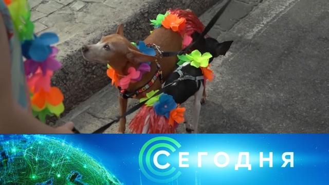 17 февраля 2020 года. 07:00.17 февраля 2020 года. 07:00.НТВ.Ru: новости, видео, программы телеканала НТВ