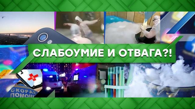 Выпуск от 2 марта 2020 года.Слабоумие иотвага?!НТВ.Ru: новости, видео, программы телеканала НТВ