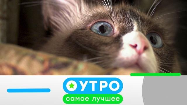 2марта 2020 года.2марта 2020 года.НТВ.Ru: новости, видео, программы телеканала НТВ