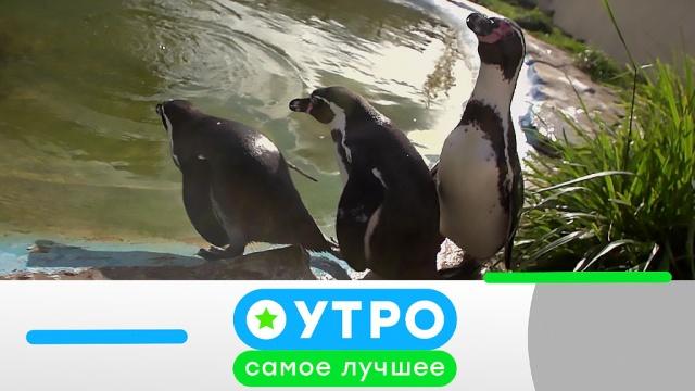 6марта 2020года.6марта 2020года.НТВ.Ru: новости, видео, программы телеканала НТВ