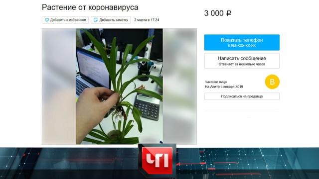 13марта 2020года.13марта 2020года.НТВ.Ru: новости, видео, программы телеканала НТВ