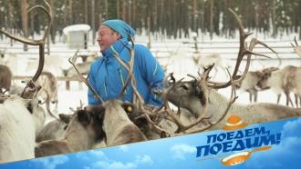 Джон Уоррен вЮгре побудет оленеводом, побывает вкедровом спа иприготовит стейк из оленины. «Поедем, поедим!»— 28марта в14:00.НТВ.Ru: новости, видео, программы телеканала НТВ