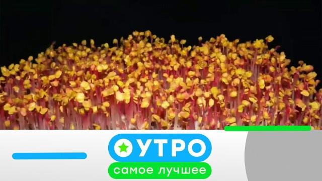 18марта 2020года.18марта 2020года.НТВ.Ru: новости, видео, программы телеканала НТВ