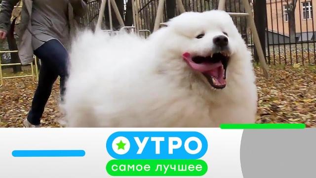 25 марта 2020года.25 марта 2020года.НТВ.Ru: новости, видео, программы телеканала НТВ