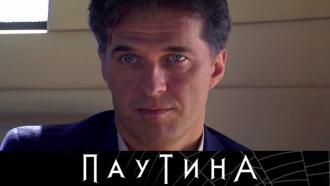 Майор Туманов работает не покладая рук! Остросюжетный сериал «Паутина»— с6апреля на НТВ.НТВ.Ru: новости, видео, программы телеканала НТВ