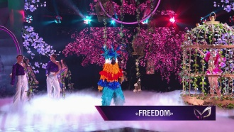 Попугай: Freedom