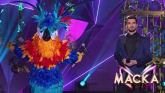 Попугай покорил жюри мировым хитом Джорджа Майкла