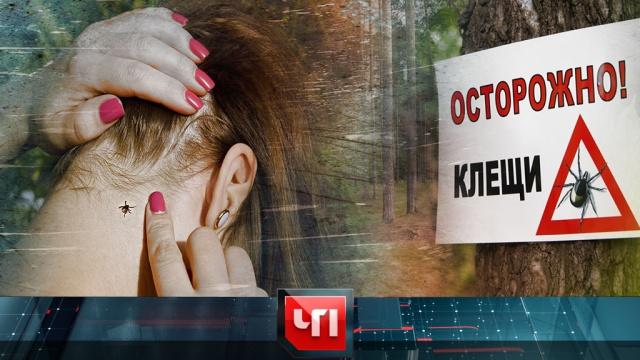 31 марта 2020 года.31 марта 2020 года.НТВ.Ru: новости, видео, программы телеканала НТВ