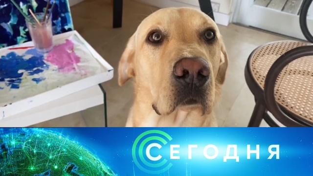 1 апреля 2020 года. 10:00.1 апреля 2020 года. 10:00.НТВ.Ru: новости, видео, программы телеканала НТВ