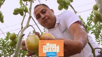 Способы выращивания томатов, недостатки зубных протезов иотличие масок ссеребром от обычных. «НашПотребНадзор»— ввоскресенье в13:00