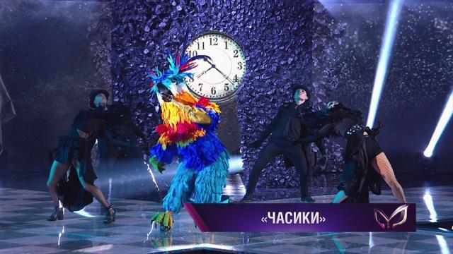 Попугай: «Часики».НТВ.Ru: новости, видео, программы телеканала НТВ