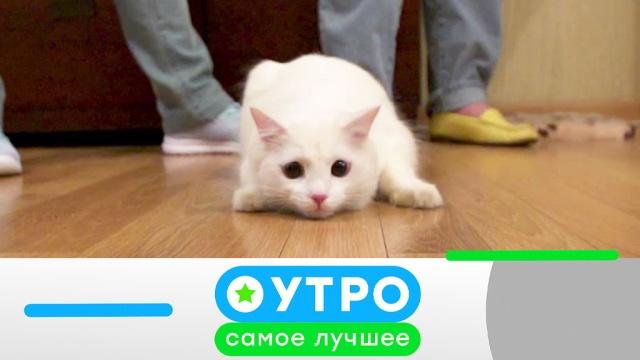 8апреля 2020года.8апреля 2020года.НТВ.Ru: новости, видео, программы телеканала НТВ
