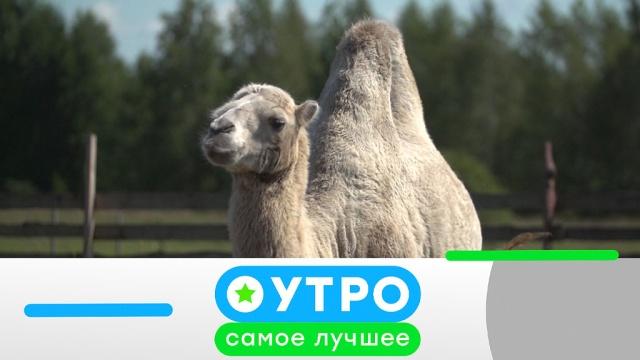 10апреля 2020года.10апреля 2020года.НТВ.Ru: новости, видео, программы телеканала НТВ