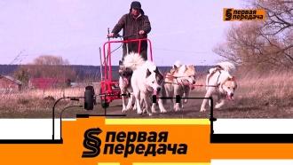 Выпуск от 12 апреля 2020 года.ДТП с собачьей упряжкой и упрямец, не пропускавший машину скорой помощи.НТВ.Ru: новости, видео, программы телеканала НТВ