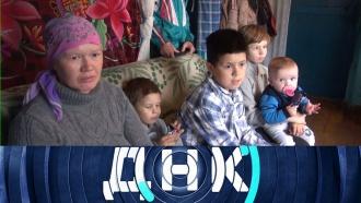 Выпуск от 16 апреля 2020 года.«Шесть тестов для пяти детей!».НТВ.Ru: новости, видео, программы телеканала НТВ