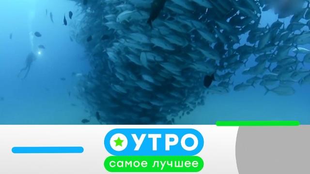 16 апреля 2020 года.16 апреля 2020 года.НТВ.Ru: новости, видео, программы телеканала НТВ