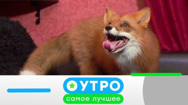 17апреля 2020года.17апреля 2020года.НТВ.Ru: новости, видео, программы телеканала НТВ
