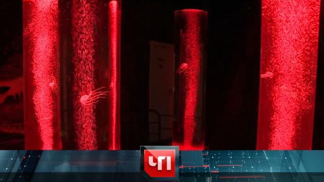 27 апреля 2020 года.27 апреля 2020 года.НТВ.Ru: новости, видео, программы телеканала НТВ
