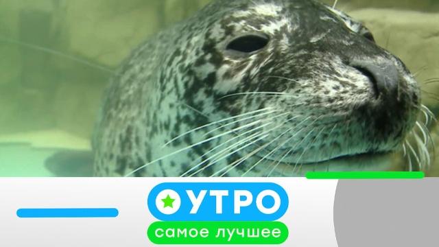 28 апреля 2020 года.28 апреля 2020 года.НТВ.Ru: новости, видео, программы телеканала НТВ