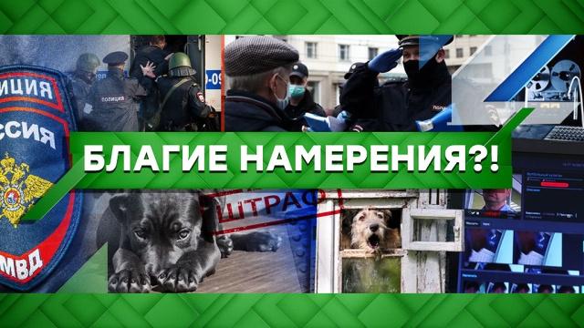 Выпуск от 28апреля 2020 года.Благие намерения?!НТВ.Ru: новости, видео, программы телеканала НТВ