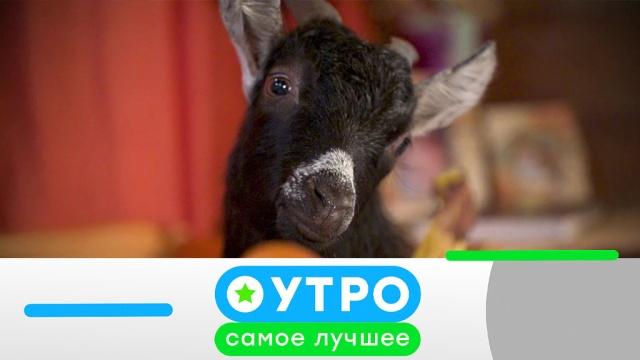 30 апреля 2020 года.30 апреля 2020 года.НТВ.Ru: новости, видео, программы телеканала НТВ
