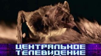 Выпуск от 2мая 2020 года.Выпуск от 2мая 2020 года.НТВ.Ru: новости, видео, программы телеканала НТВ