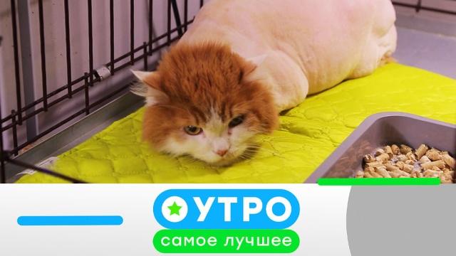 4 мая 2020 года.4 мая 2020 года.НТВ.Ru: новости, видео, программы телеканала НТВ