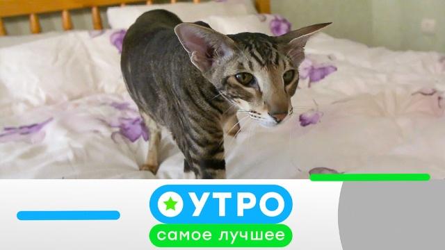 13 мая 2020года.13 мая 2020года.НТВ.Ru: новости, видео, программы телеканала НТВ