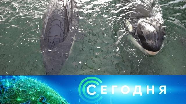 17 мая 2020 года. 16:00.17 мая 2020 года. 16:00.НТВ.Ru: новости, видео, программы телеканала НТВ