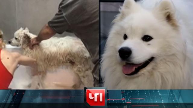 27 мая 2020 года.27 мая 2020 года.НТВ.Ru: новости, видео, программы телеканала НТВ