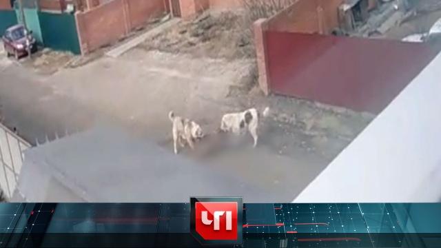 28 мая 2020 года.28 мая 2020 года.НТВ.Ru: новости, видео, программы телеканала НТВ