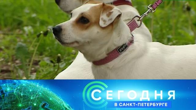 11 июня 2020 года. 16:15.11 июня 2020 года. 16:15.НТВ.Ru: новости, видео, программы телеканала НТВ