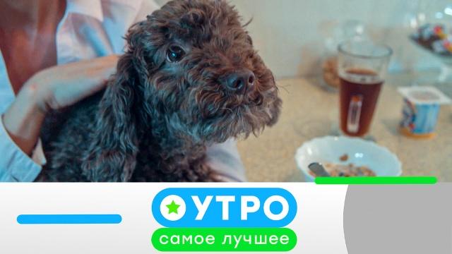 16 июня 2020 года.16 июня 2020 года.НТВ.Ru: новости, видео, программы телеканала НТВ