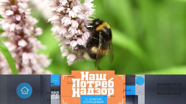 Выпуск от 21 июня 2020 года.Съедобные дикие травы испособы избавиться от домашних насекомых.НТВ.Ru: новости, видео, программы телеканала НТВ