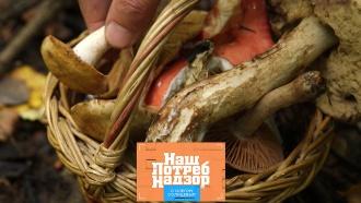 Опасности съедобных грибов ипроверка сливочных сосисок. «НашПотребНадзор»— всубботу на НТВ