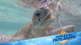 Целебные источники, морские черепахи иколоритный фастфуд: Джон Уоррен покажет индонезийскую экзотику. «Поедем, поедим!»— всубботу на НТВ