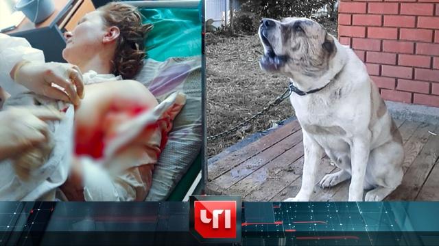 29 июня 2020 года.29 июня 2020 года.НТВ.Ru: новости, видео, программы телеканала НТВ