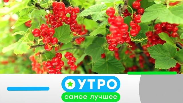 6 июля 2020года.6 июля 2020года.НТВ.Ru: новости, видео, программы телеканала НТВ