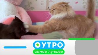 22июля 2020 года.22июля 2020 года.НТВ.Ru: новости, видео, программы телеканала НТВ