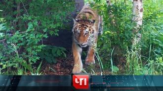 29 июля 2020 года.29 июля 2020 года.НТВ.Ru: новости, видео, программы телеканала НТВ