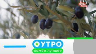 27 августа 2020 года.27 августа 2020 года.НТВ.Ru: новости, видео, программы телеканала НТВ