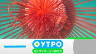 8 сентября 2020 года.8 сентября 2020 года.НТВ.Ru: новости, видео, программы телеканала НТВ