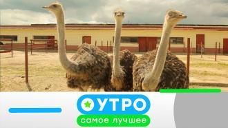 9 сентября 2020 года.9 сентября 2020 года.НТВ.Ru: новости, видео, программы телеканала НТВ