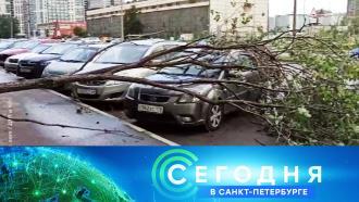 10 сентября 2020 года. 16:15.10 сентября 2020 года. 16:15.НТВ.Ru: новости, видео, программы телеканала НТВ