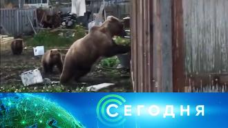 18 сентября 2020 года. 16:00.18 сентября 2020 года. 16:00.НТВ.Ru: новости, видео, программы телеканала НТВ