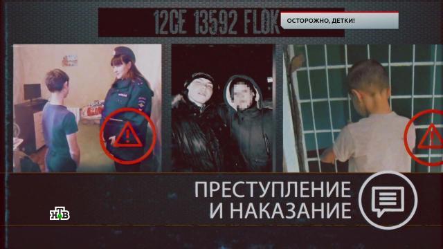 «Осторожно, детки!».«Осторожно, детки!».НТВ.Ru: новости, видео, программы телеканала НТВ