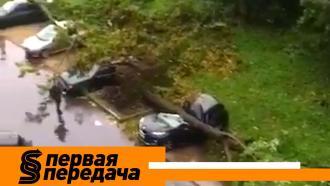 Кто ответит за упавшее на машины дерево ичто делать, если вавто засорился «водопровод»? «Первая передача»— ввоскресенье в10:20