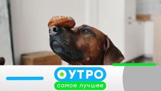 30сентября 2020года.30сентября 2020года.НТВ.Ru: новости, видео, программы телеканала НТВ